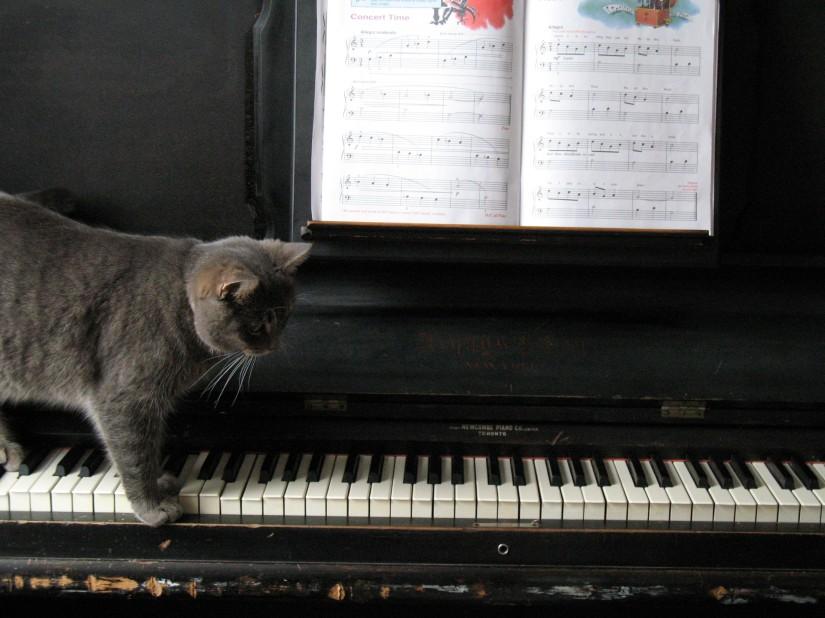 piano-cat-1404179-1920x1440
